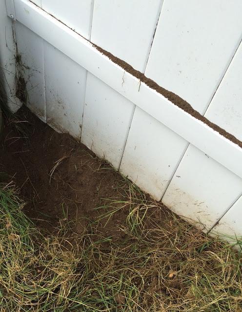 Dog digging hole monday mischief