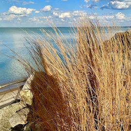 Chaska Beach Spring grass.