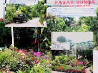 Jelajah Pasar Bunga Splindit Kota Malang
