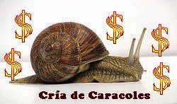 Cría de Caracoles, Negocio Lucrativo