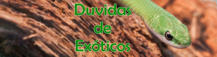 ...:::Duvidas de Exóticos:::...