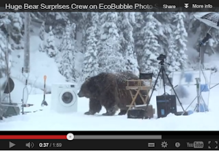 video with huge bear