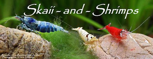 Skaii-and-shrimps