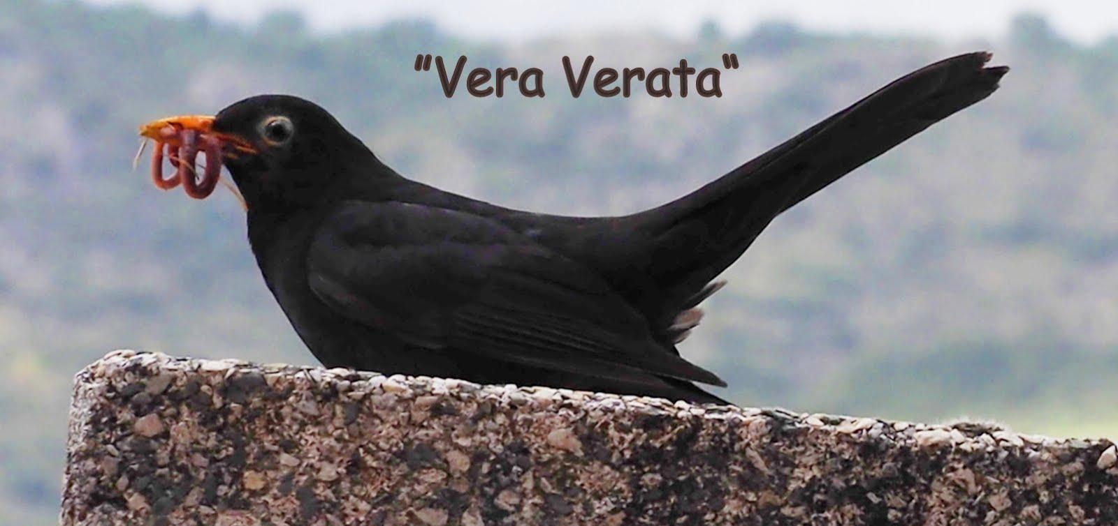Veraverata. La Vera. Extremadura