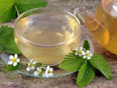 manfaat teh daun strawberry untuk ibu hamil