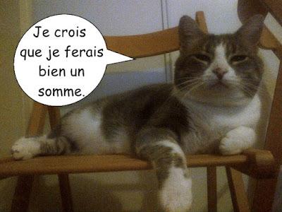 Chat blanc et tabby sur une chaise.