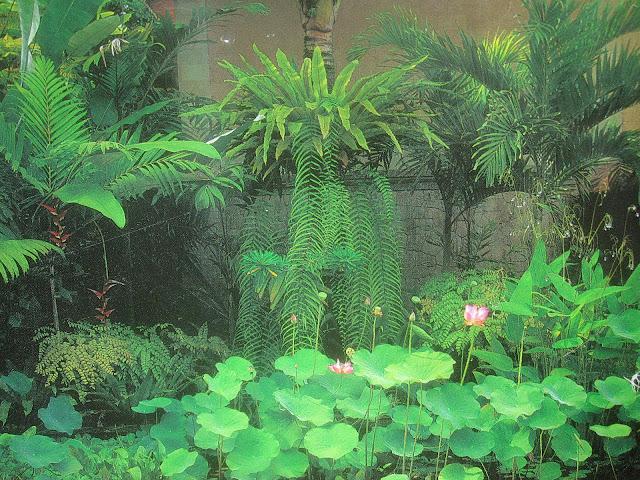 Tropical texana garden book review tropical garden design for Garden design ideas book