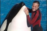 Paus Orca Menyerang Pelatihnya di Sea World Amerika Serikat