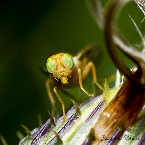 Macro d'insecte printemps