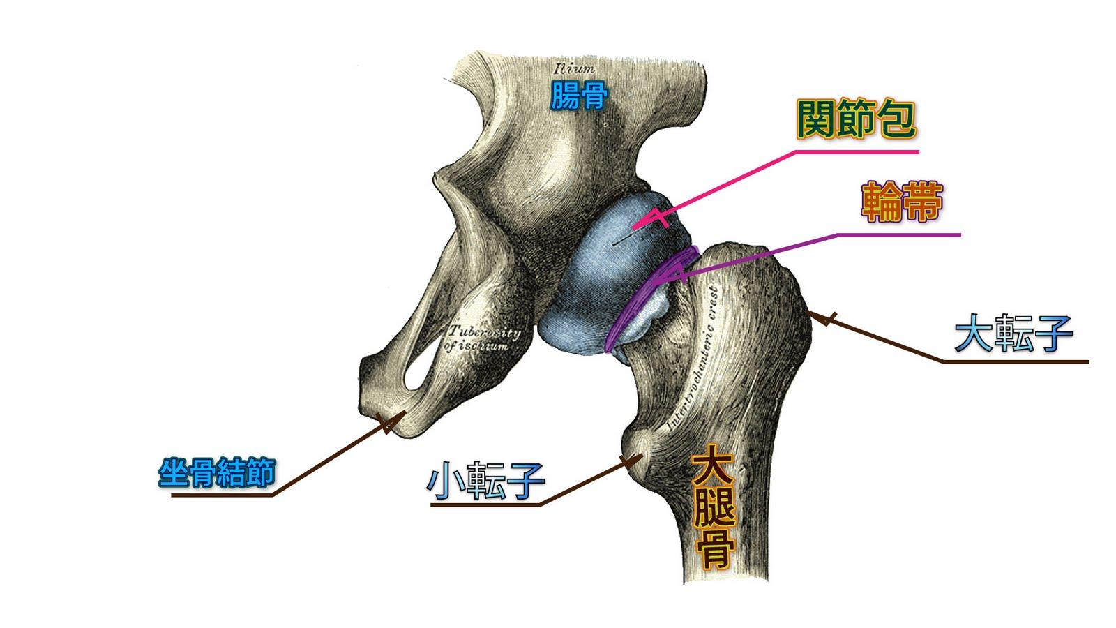 参考図書 中村隆一 ほか,基礎運動学 第6版,医歯薬出版. 2009 ... 理学療法士 Phy