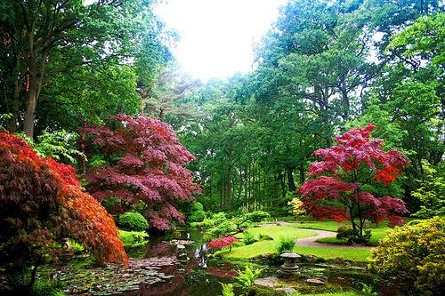 Un jardín con diversas flores de todo color.