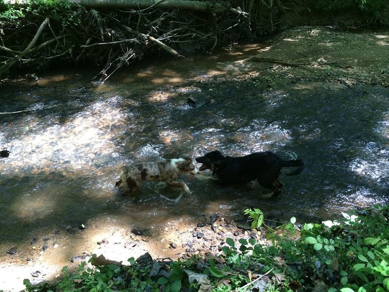 北バージニア犬聞録: コディ、ち...