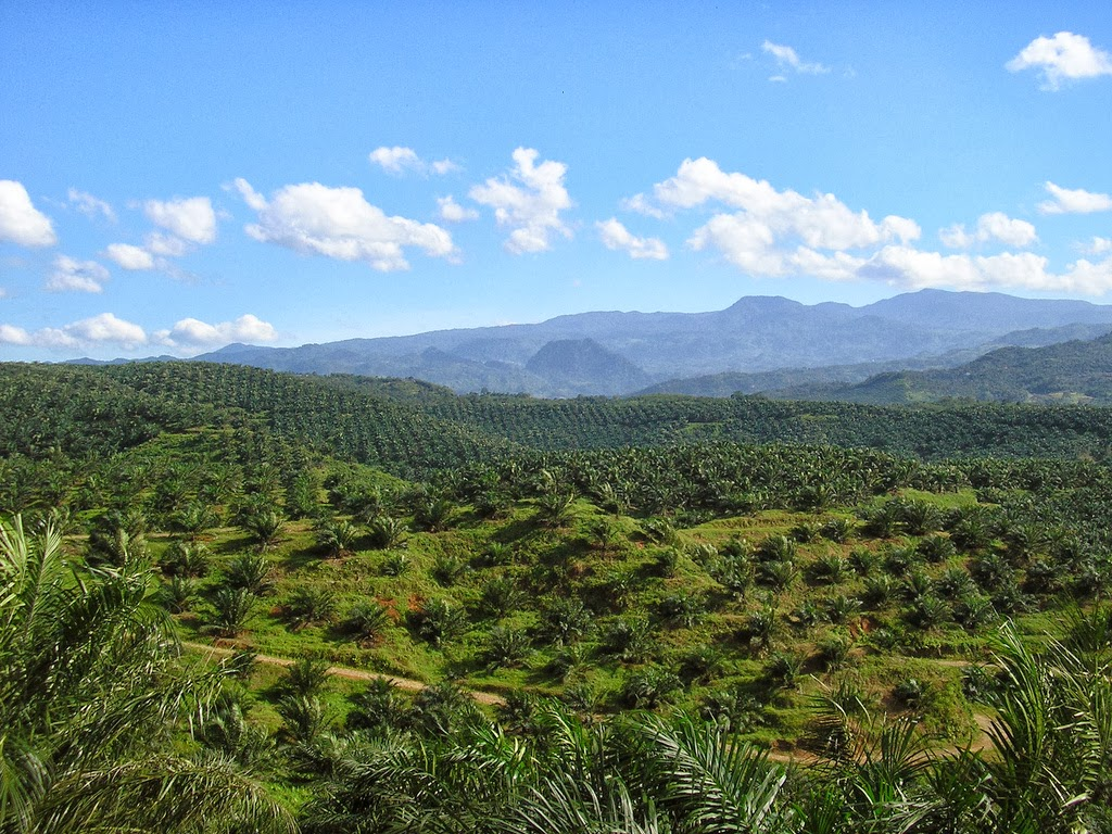 jpeg, Politik kelapa sawit: Peranan Indonesia, Malaysia dan Singapura
