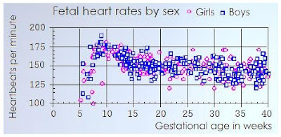 Babies heartbeat can predict sex