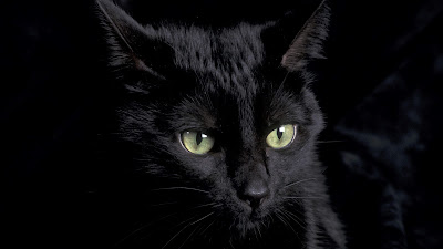 beautiful black cat with amazin green eyes wallpaper 1920x1080