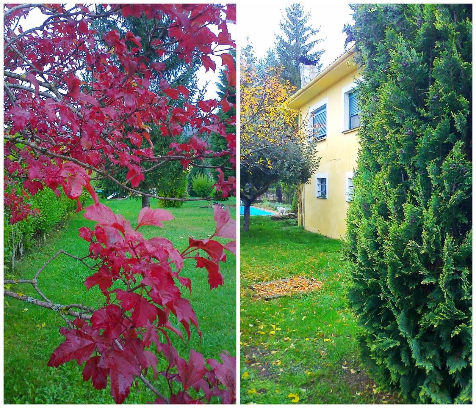 La casa amarilla nuestro jard n en oto o for Jardines en otono