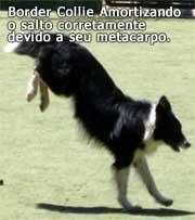 cães adestramento