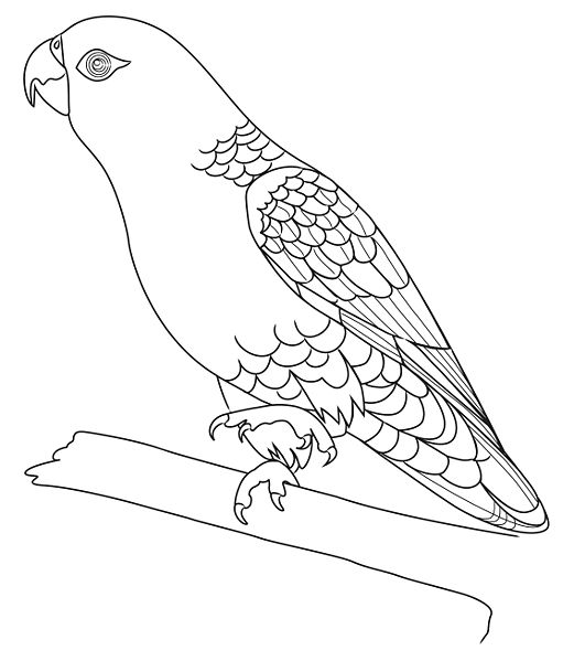 Parrot drawing outline - photo#6