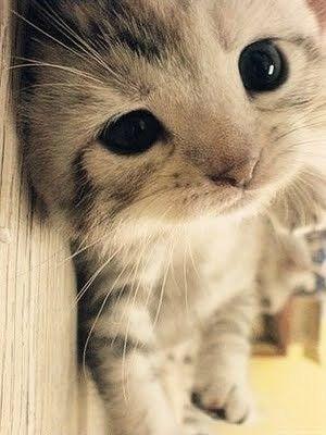 Catatan Inspirasi Gambar Kucing Lucu