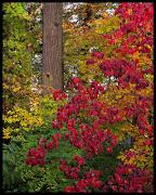 Fall Foliage Photos around D.C.