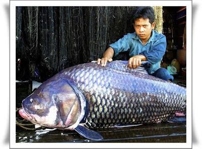 ikan paling besar di dunia
