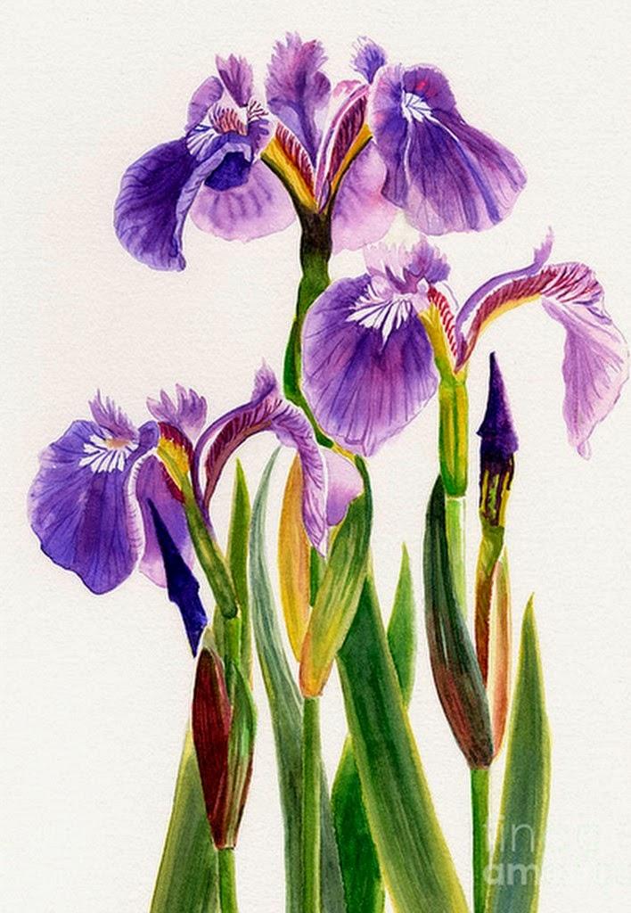 cuadros-de-flores-grandes-acuarelas
