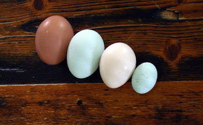 Different Sizes of Eggs set on dark wooden background