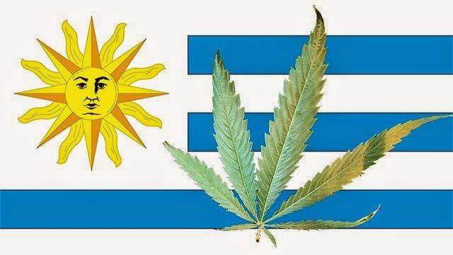 legalizar a cannabis completamente