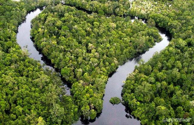 UNDP : Hutan Tropis Indonesia Penting Bagi Seluruh Dunia