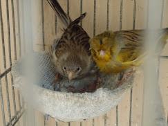 Tratando dos 2 primeiros filhotes de 2011