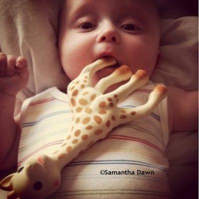 sophie the giraffe sophie la girafe product review © samantha dawn