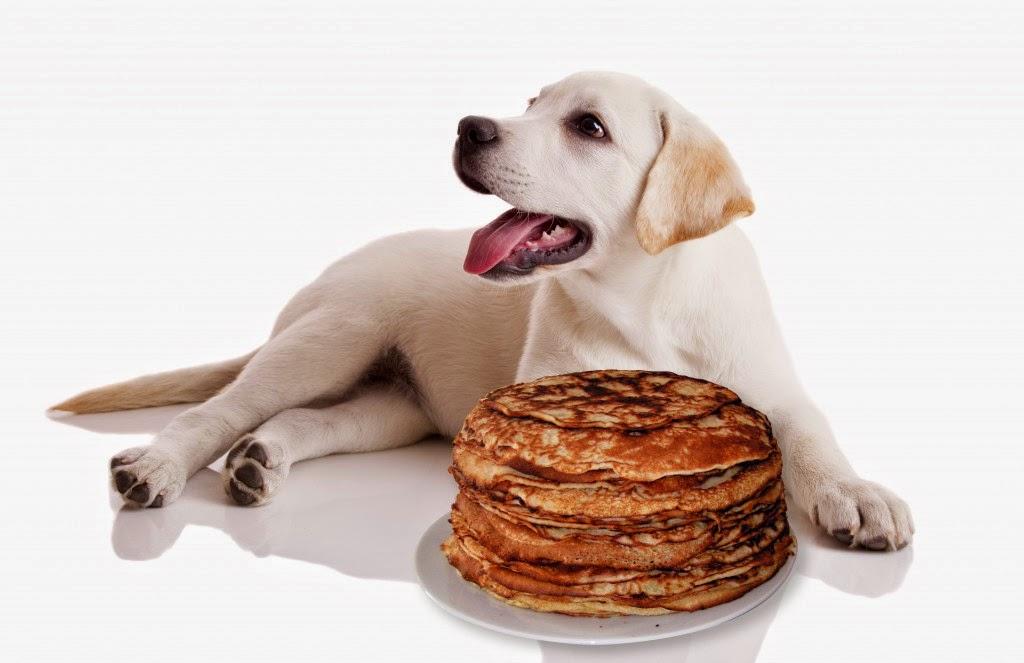 Cachorro pode comer panquecas?