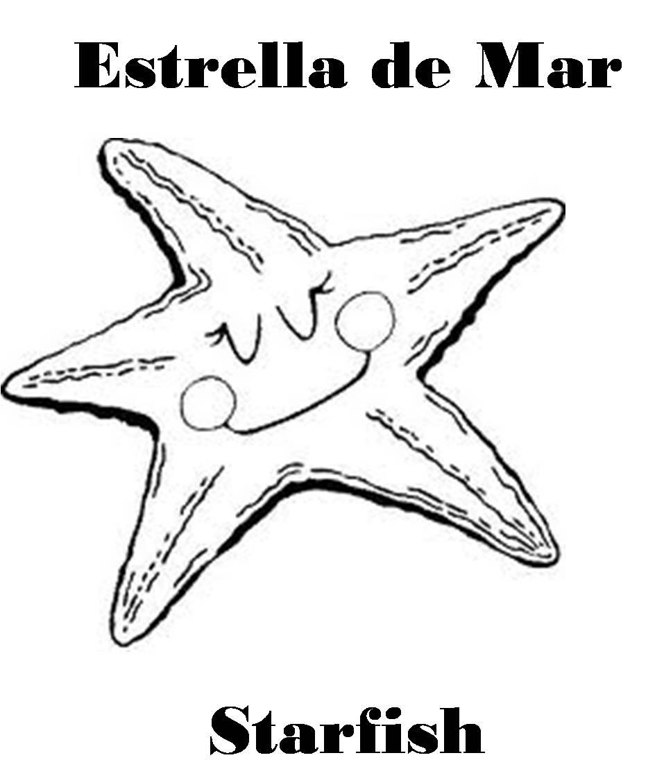 Imagenes para dibujar en Ingles y español: Animales Marinos para ...