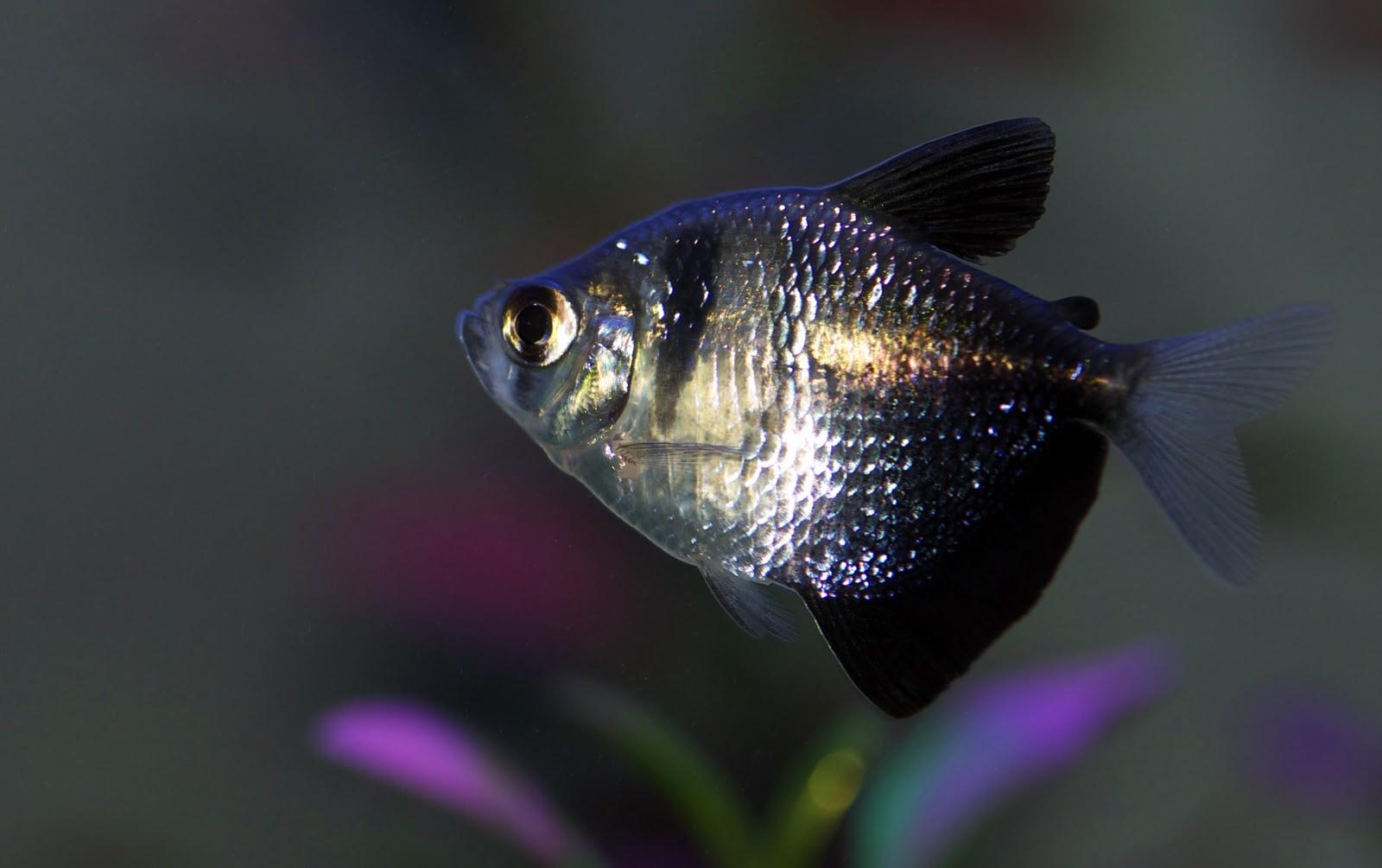 Юбка рыбка