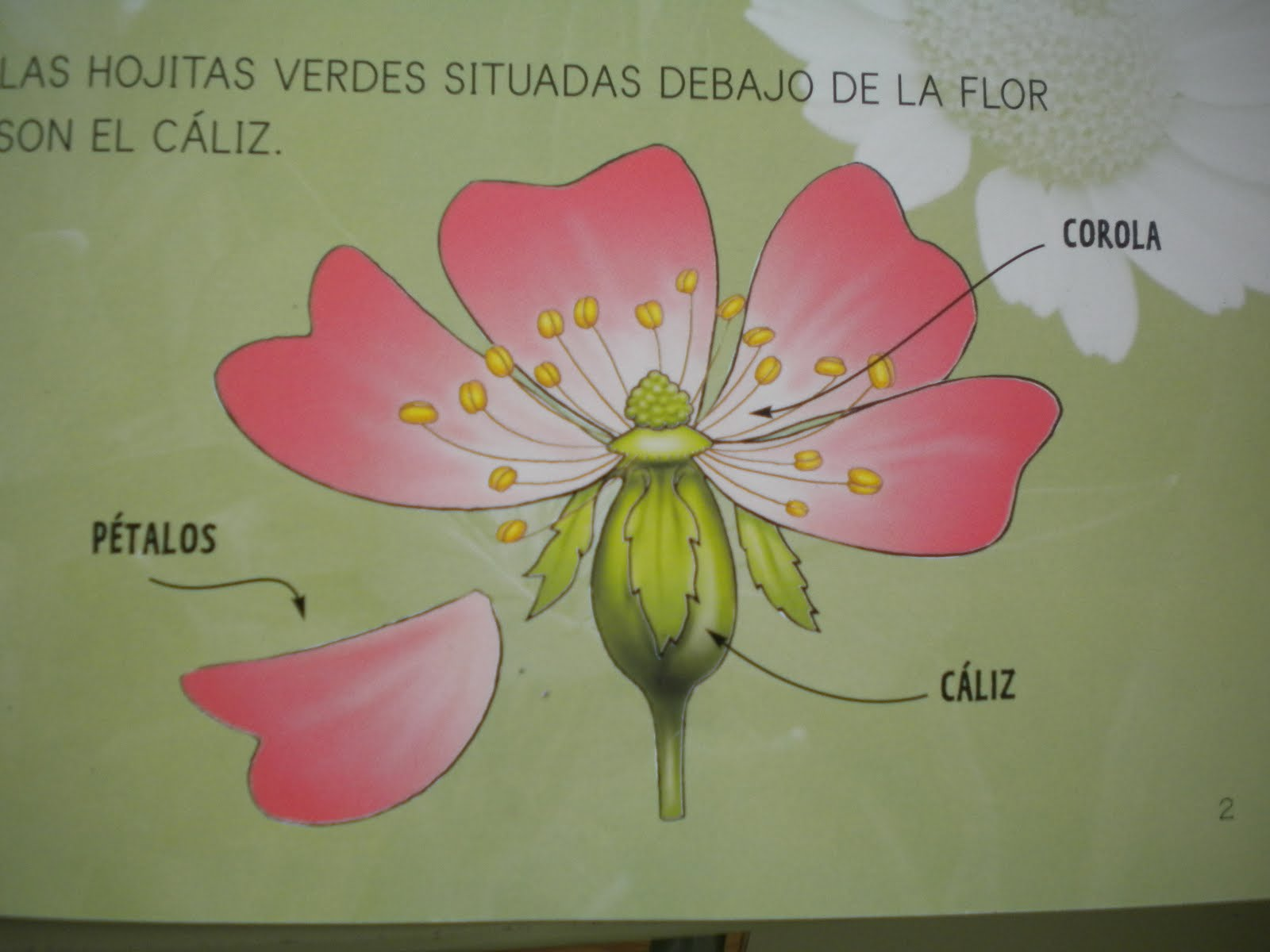 MIL PEQUES DE COLORES: LAS PARTES DE LA PLANTA