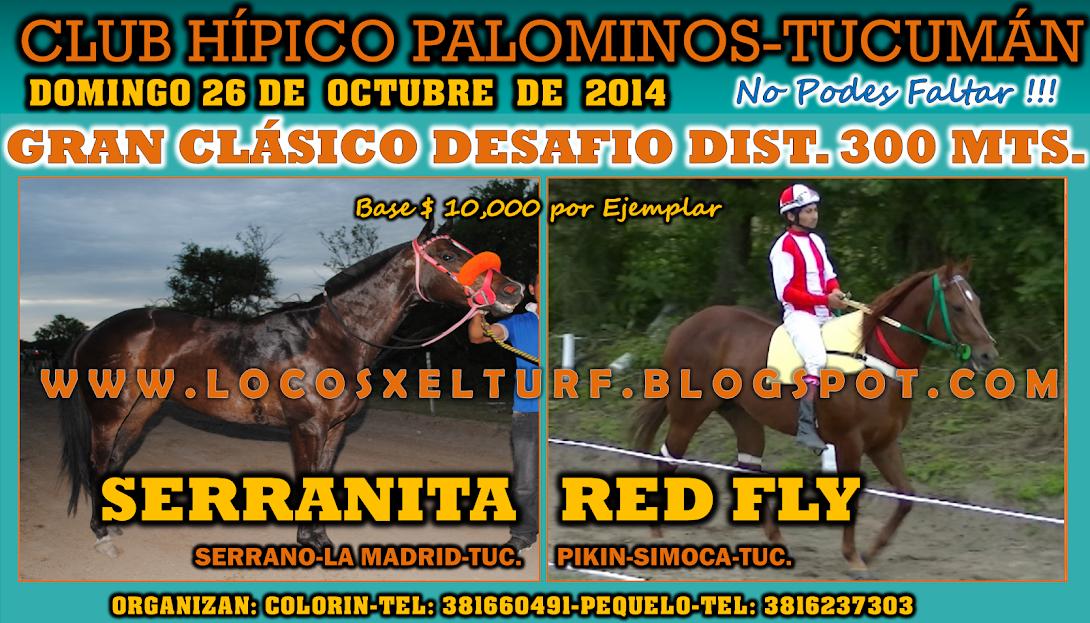 26-10-14-CLAS-HIP. PALOMINOS