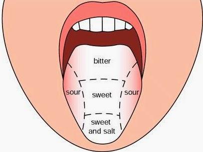 tongue diagram taste | Diarra