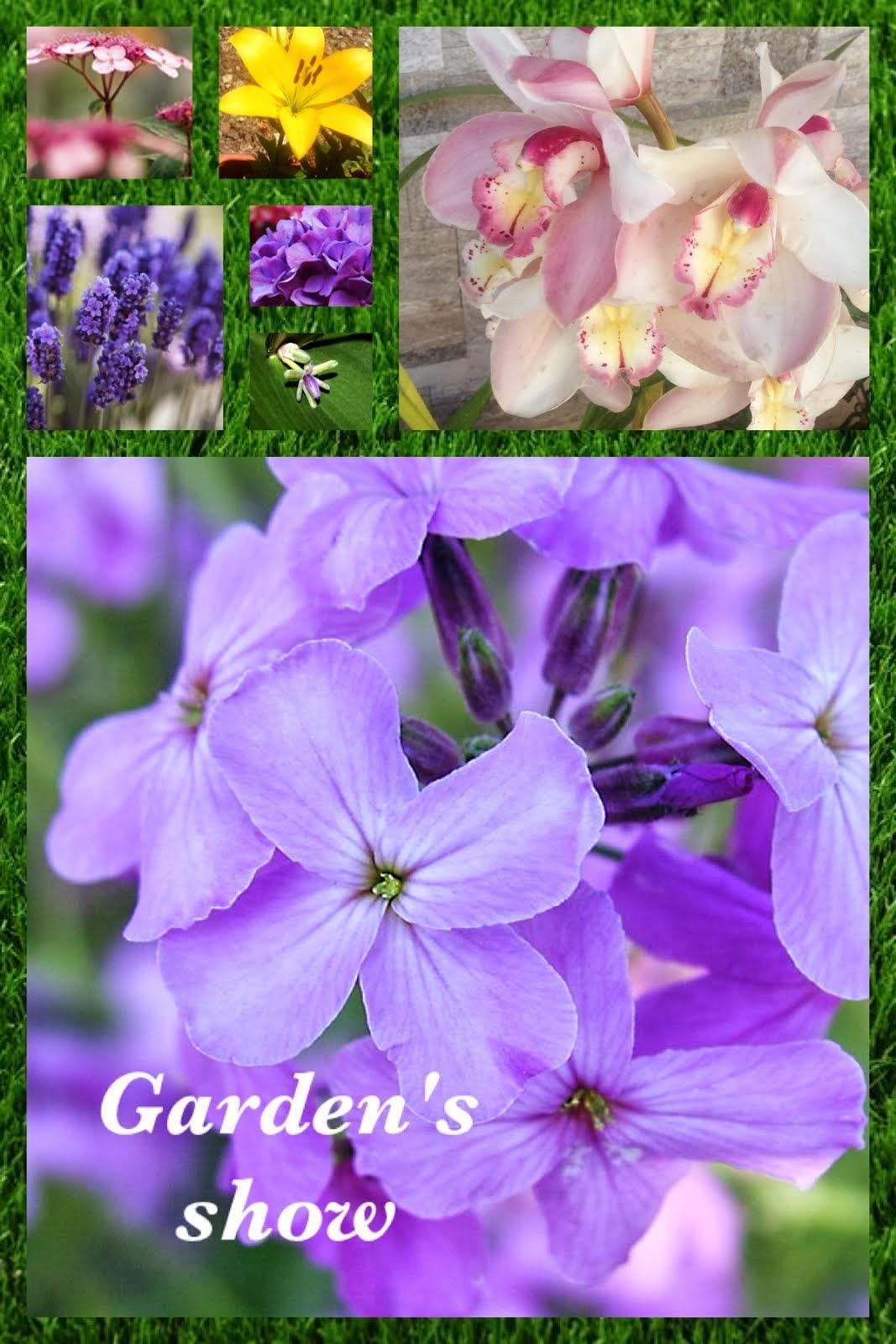 Tutti i consigli sul Giardinaggio