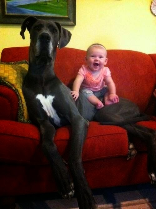 صور كلاب ضخمة جداً اكبر من الانسان