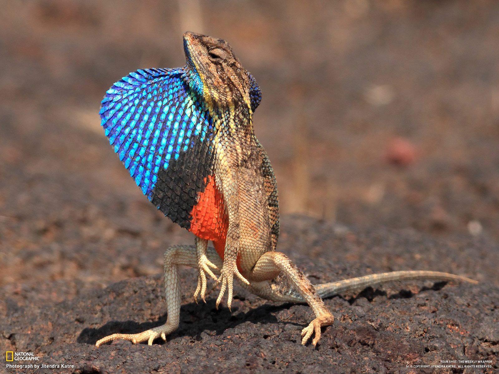 Ikitkemu: Beautiful Lizard: ikitkemu.blogspot.com/2011/09/beautiful-lizard.html