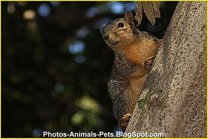 http://1.bp.blogspot.com/-4zb3qpNujhU/TtyVTigchlI/AAAAAAAACcI/Xh38NM5NCwk/s1600/squirrel.jpg