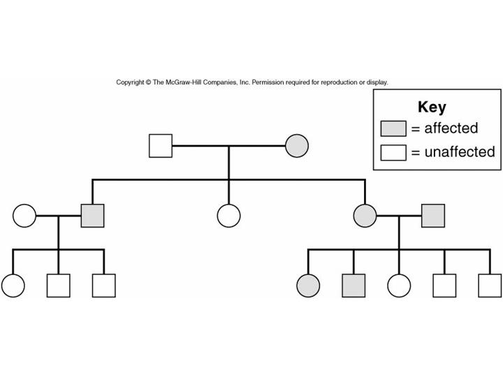 Albinism Pedigree Chart image search results
