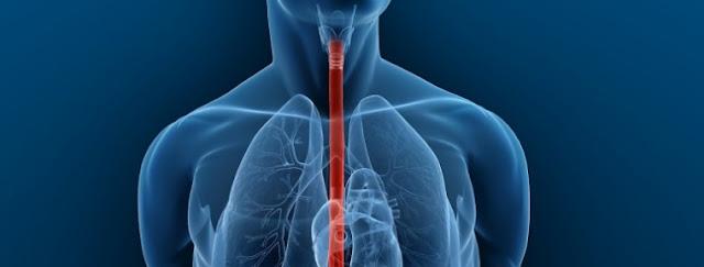 Esofago y tracto gastrointestinal