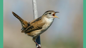 Guia Sonora de las Aves de España | Ciencias naturales