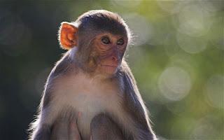 Dikira Monyet, Bapak Tembak Anaknya Hingga Mati
