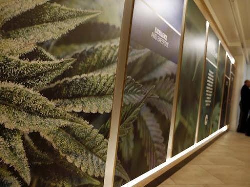 Nova York inaugura primeira clinica de maconha medicinal