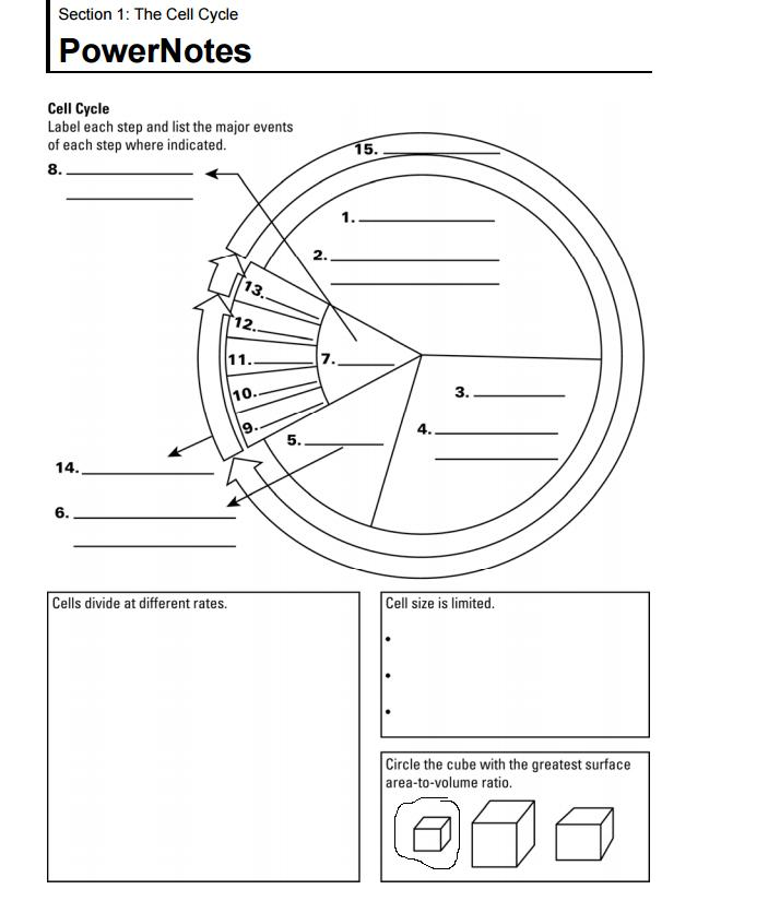 MrsCruzs Biology Class Chapter 5 Cell Growth and Division – Phases of the Cell Cycle Worksheet