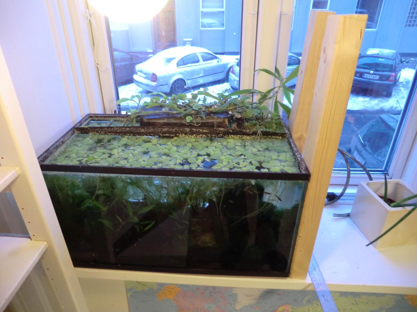 The Fishtank Aquaponics 2 Apartment Aquaponics