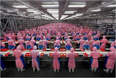 Mia's Domain: Don't Let Chicken Packing Plants Operate Their ...