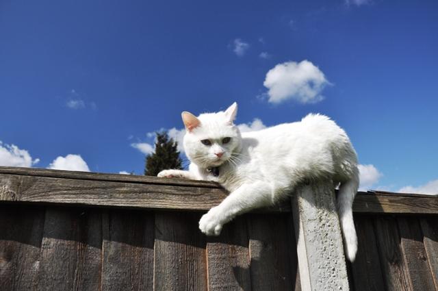 Saffuan Jaffar Blog Travel Charlie Kucing Gebu